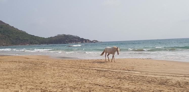 India - Agonda Horse - Copy